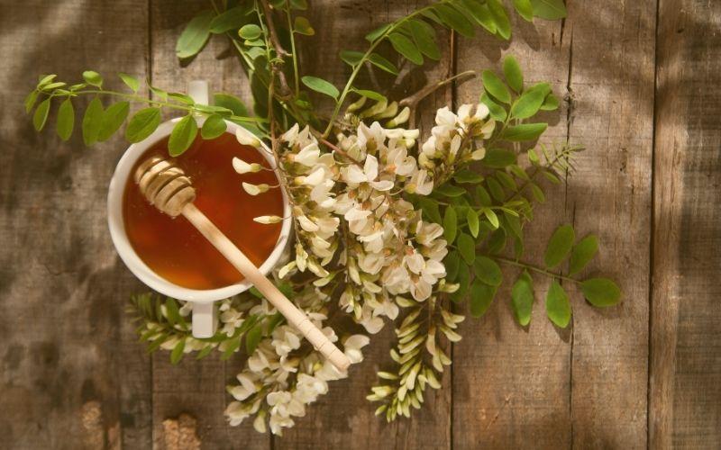 au-miel.fr - miel d acacia