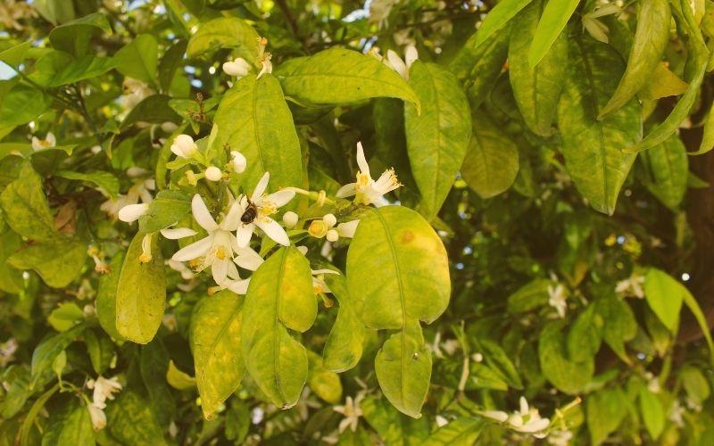 au-miel.fr - miel de fleur d organger