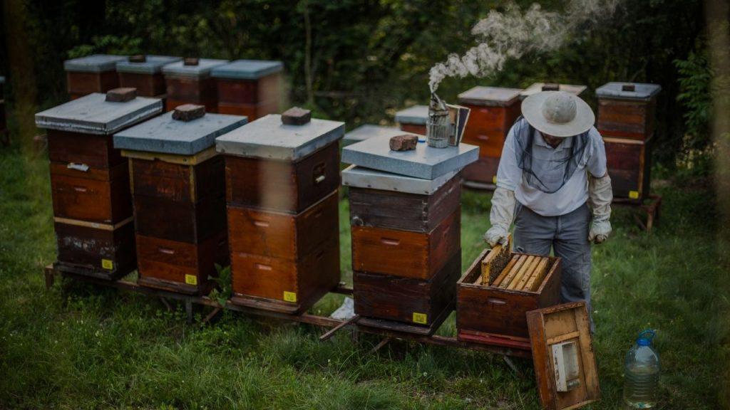 fabrication de miel
